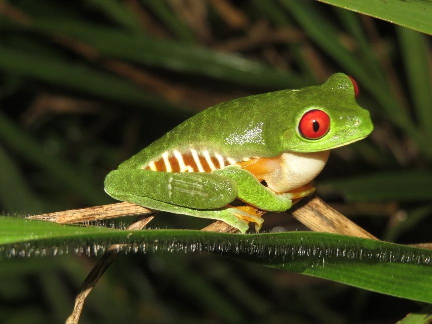 Anfibios de Daniel Flores y su potencial para el estudio de nuestroambiente.